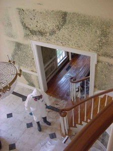 mold removal site